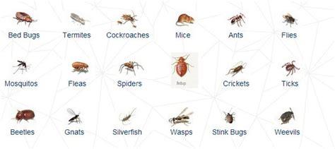 common bedroom insects common bedroom insects digitalstudiosweb com
