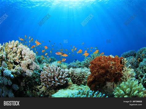 Powerpoint Template Coral Reef And Tropical Fish Cgxcgycc Coral Reef Powerpoint Template Free
