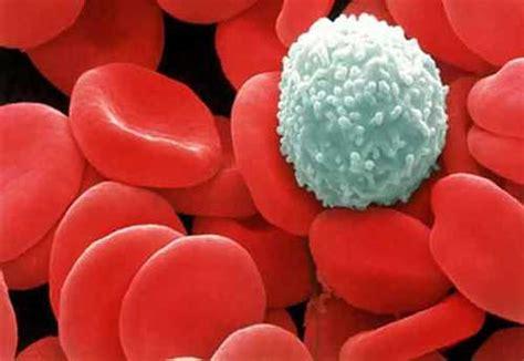 globuli bianchi bassi e alimentazione globuli bianchi bassi definizione cause e conseguenze