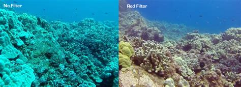 Gopro 5 Underwater Housing Diving Snorkeling Filter why use a filter with your gopro hero5