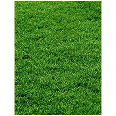 prezzo tappeto erboso semi tappeto erboso sementi e bulbi