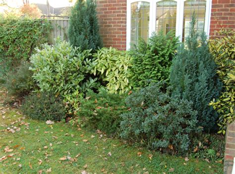 border planting low maintenance front garden plantpassion