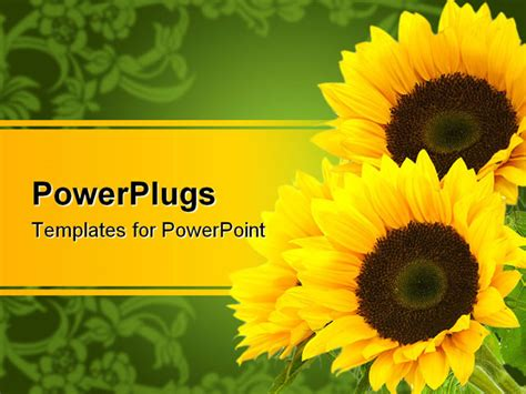 best powerpoint template three sunflowers isolated on a