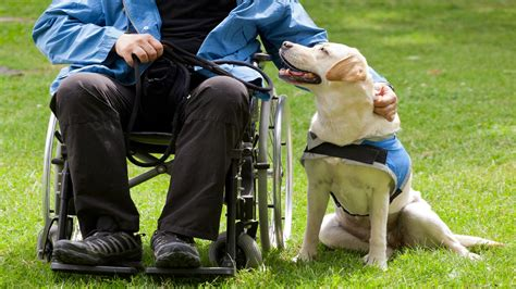 best dogs to as service dogs the amazing crusades of working dogs therapy dogs service dogs
