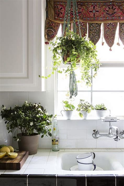Best Window For Plants 25 Best Ideas About Kitchen Plants On Green
