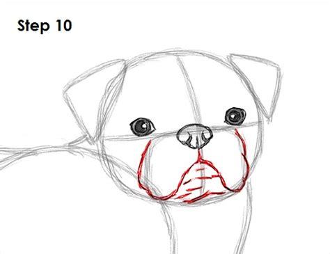 step by step how to draw a pug how to draw a pug car interior design