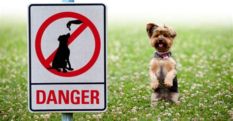 when do you give puppies the world s most dangerous foods for dogs tellwut