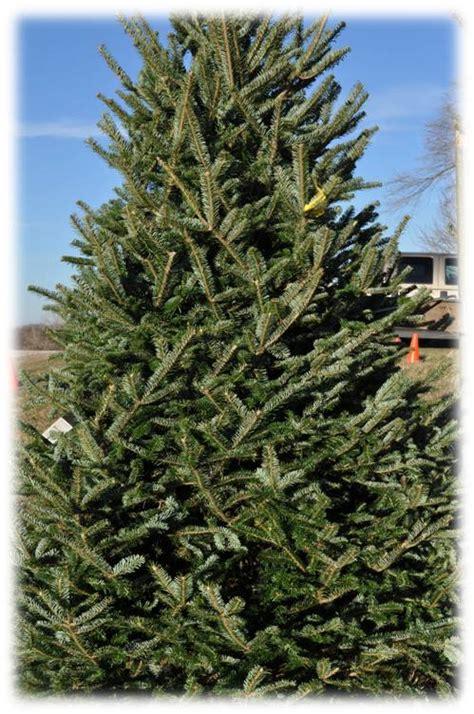 kansas city area christmas tree farms 2015 171 kansas city