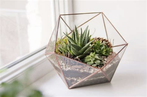 best plants for self contained terrarium 3 things to about caring for succulents zing by quicken loans zing by quicken