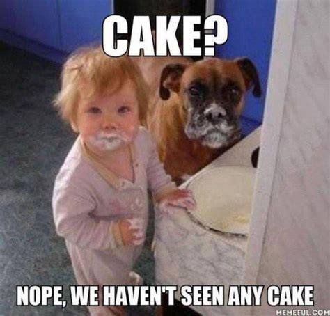 Meme Birthday Cake - dog birthday cake meme funny image