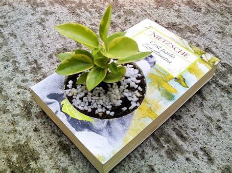 Book Planter by Diy How To Create A Gorgeous Planter From An