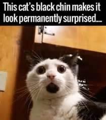 Surprised Cat Meme - checkmate evolution meme guy