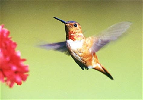 hummingbird photo album