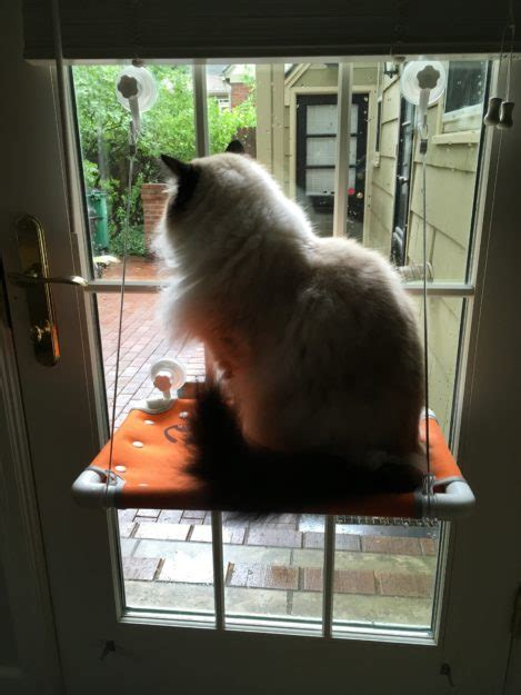 cat window bed purrlala cat bed sunny window perch product review