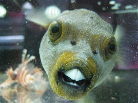 puppy fish a faced fish and others fish faces and a