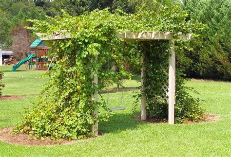 trellis and grape arbor by gnarlyerik lumberjocks com woodworking community