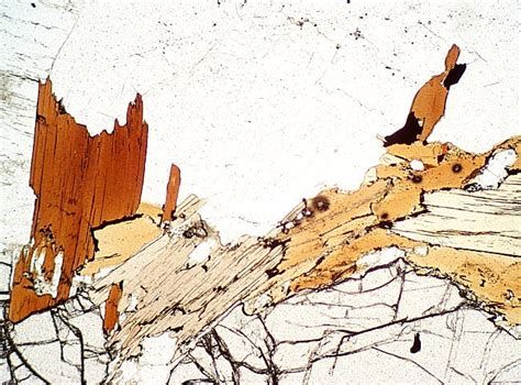 biotite thin section igneous minerals