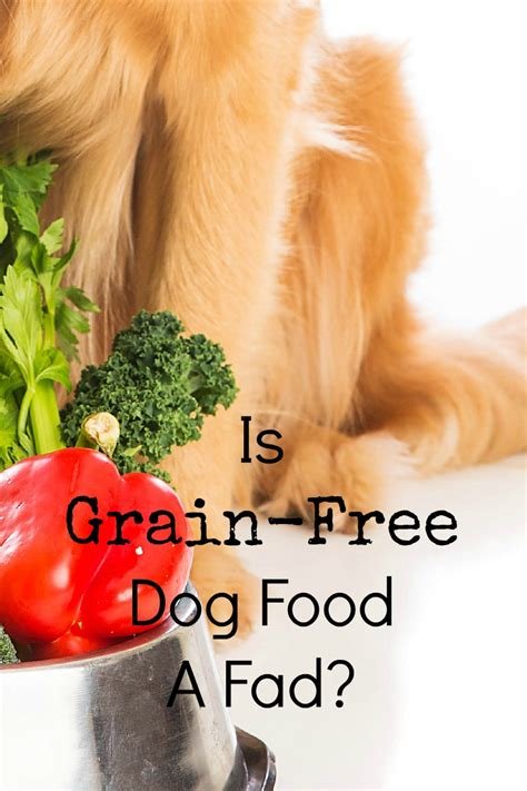 is grain bad for dogs is grain free food a fad dogvills