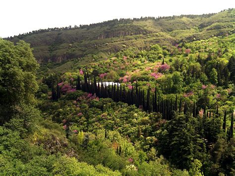 Botanical Garden Wiki File Botanic Garden Tbilisi Jpg