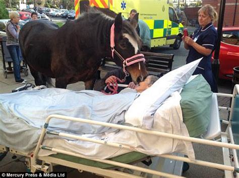 farewell to the horses grandmother dying of cancer reunited with horse in heartbreaking scenes daily mail online