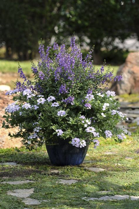 heat l for plants 17 best images about garden planters and flower pots on