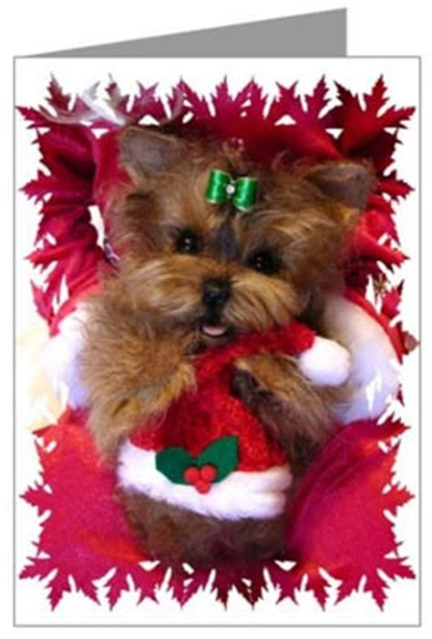 yorkie  christmas quotes quotesgram