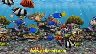 3D Fish School Aquarium Screensaver   Geliosoft   YouTube