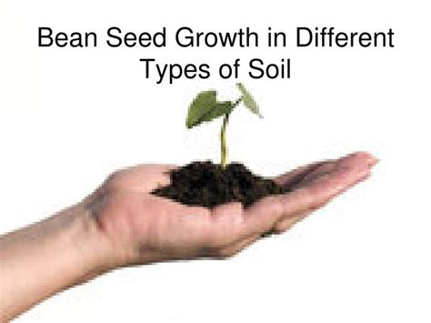 PPT   Bean Seed Growth in Different Types of Soil PowerPoint Presentation   ID:1092678