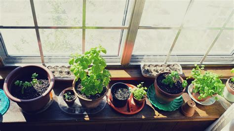 grow light indoor garden limited space for indoors garden use t5 lights t5 grow
