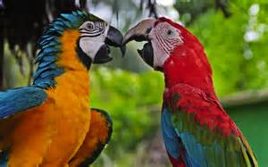 bird watching travel tips colombia travel guide colombia