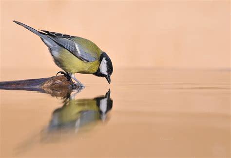 bird drinking water animal photos on creative market