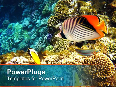 Powerpoint Template A Number Of Colorful Fish With Coral Reef In The Background 12367 Coral Reef Powerpoint Template Free