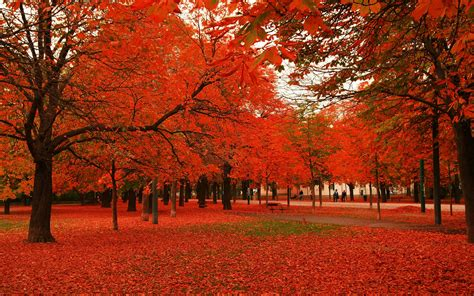 red autumn leaves wallpapers wallpaper high definition