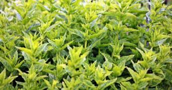 il giardino verde foto gratis aroma piante aromatiche agricoltura