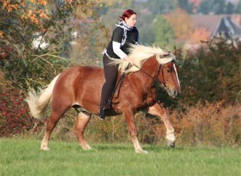 Suche Reihenhaus Zu Kaufen by 1000 Bilder Zu Pferde Auf Ponys Suche Und Ebay