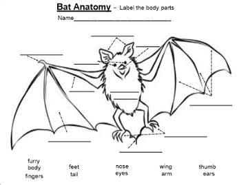 labelled diagram of a bat bat anatomy label parts pdf by smart lesson plans