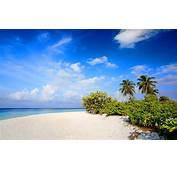 Beach Nature Wallpaper  2560x1600 29226
