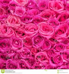 Roses pink flowers background stock photo image 39849728
