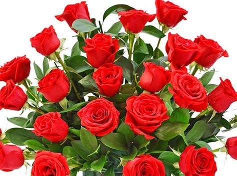 imagenes variadas de rosas ramos de flores naturales