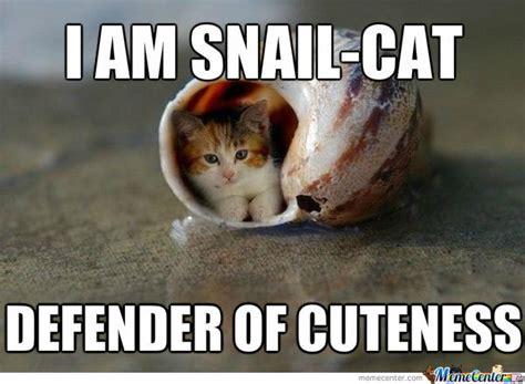 Russian Cat Meme - blue russian cat meme memes