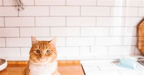 constantly satisfying a cat s curiosity catable by ruan the not very satisfying reason your cat keeps knocking