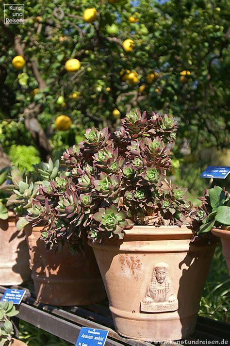 botanischer garten palermo palermo botanischer garten palermo auf sizilien