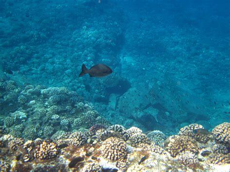 Green Sea Turtle Photo Feathers