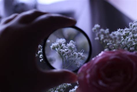 wallpaper flower glass wallpaper flower rose magnifying glass zoom hand