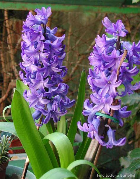 fiori linguaggio il galateo dei fiori quello che sai e non sai
