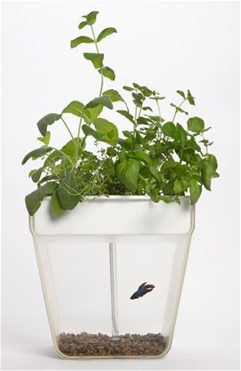 Fish Tank Vegetable Garden Back To The Roots Aquafarm Aquaponic Indoor Garden With