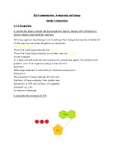 Respiration Revision Questions And Answers A Level