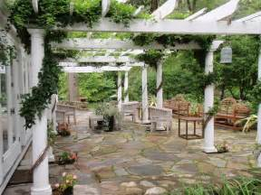 Best Vines For Pergola by Tips For Vines On Pergolas Patio Covers And Arbors