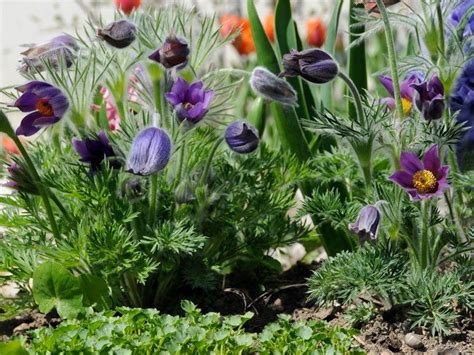 Garten Pflanzen Trockener Standort by Trockener Standort Und Trockene B 246 Den