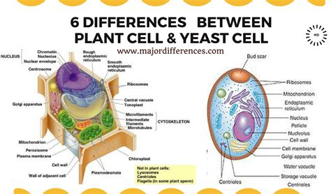 differences  plant cell  yeast cell md